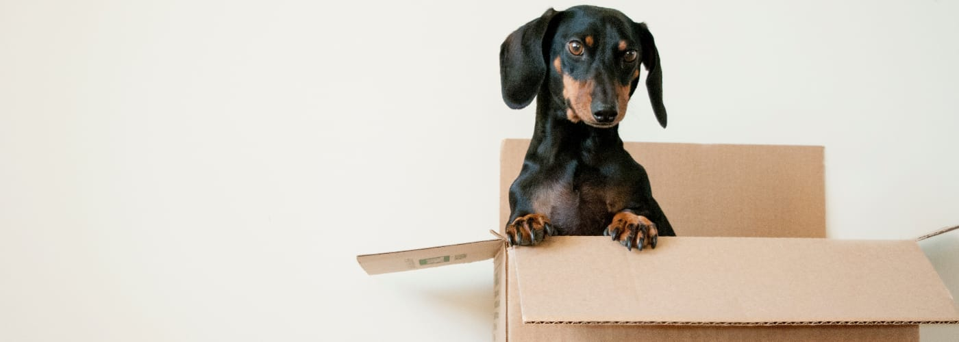 How to Move Pets Without a Hassle